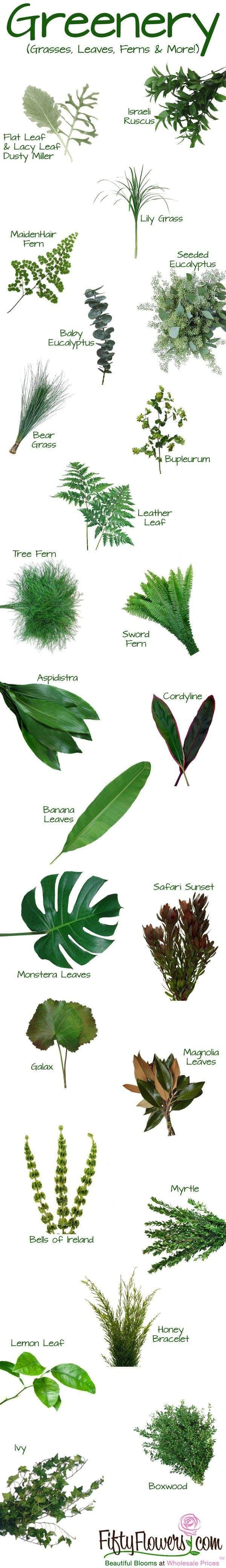 Greenery And Fillers Types Of Ferns Leaves Etc For Bouquet Filler Flower Arrangements Types Of Flowers Flower Names