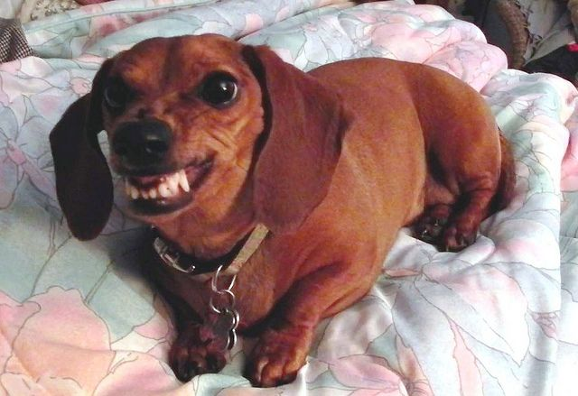 angry wiener