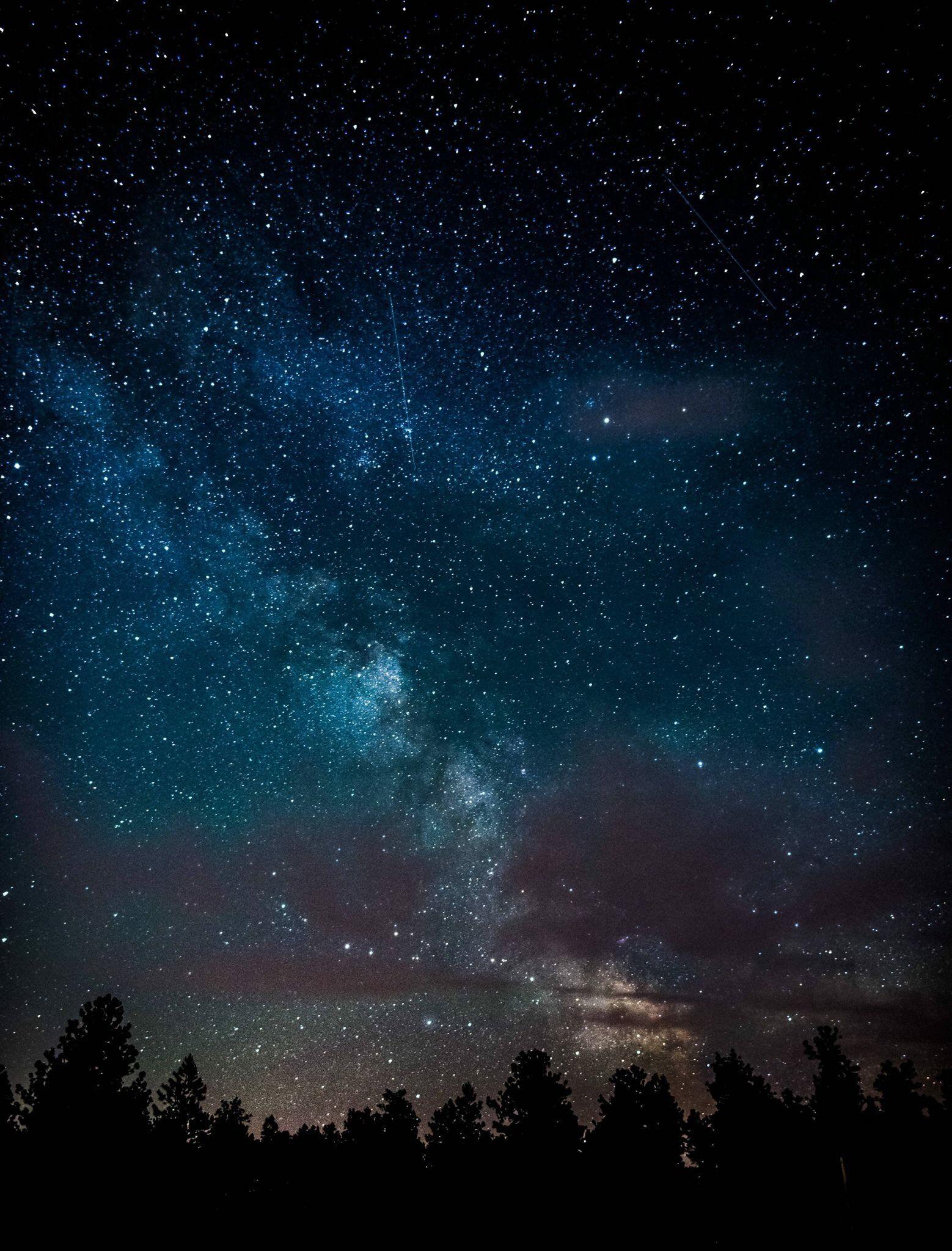 Night sky & silhouette of the trees