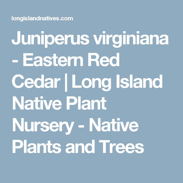 Juniperus Virginiana Eastern Red Cedar Red Cedar