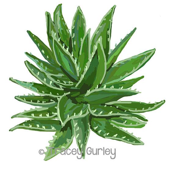 L Aloe Vera Plante Art Original Art Télécharger 2 Fichiers