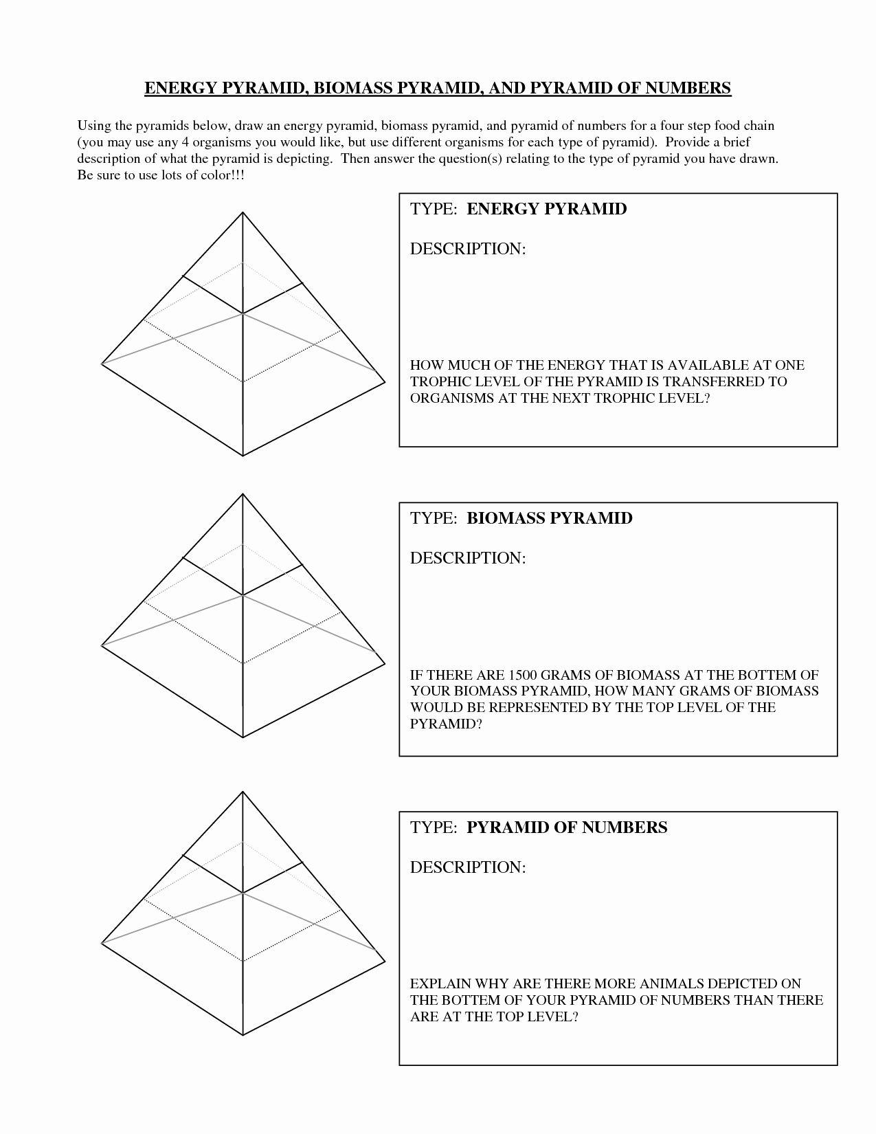 Ecological Pyramids Worksheet Answer Key Inspirational 13