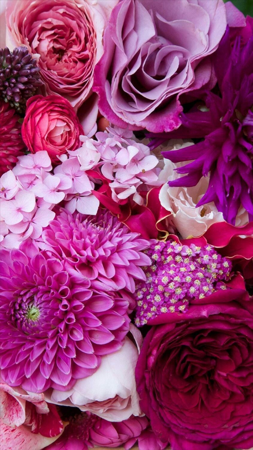meaningful colors... | Nature | Flowers, Iphone wallpaper ...