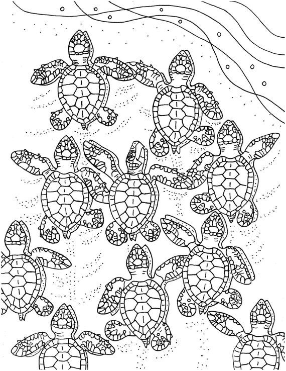 Baby Sea Turtles coloring page sea turtle art by ColorCoastalArt ...