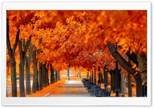 Autumn Hd Desktop Wallpapers For Widescreen High Definition Mobile Page 1 Autumn Trees Autumn Leaves Wallpaper Autumn Nature