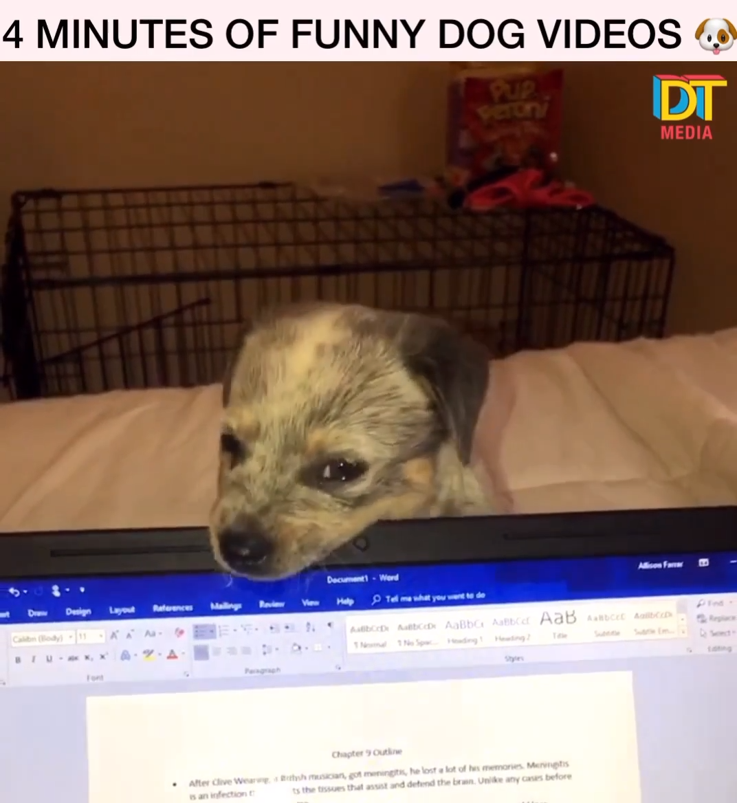 Photo of Funny Dog Videos