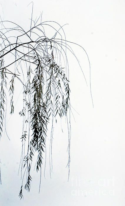 Weeping Willow Branch Tattoo
