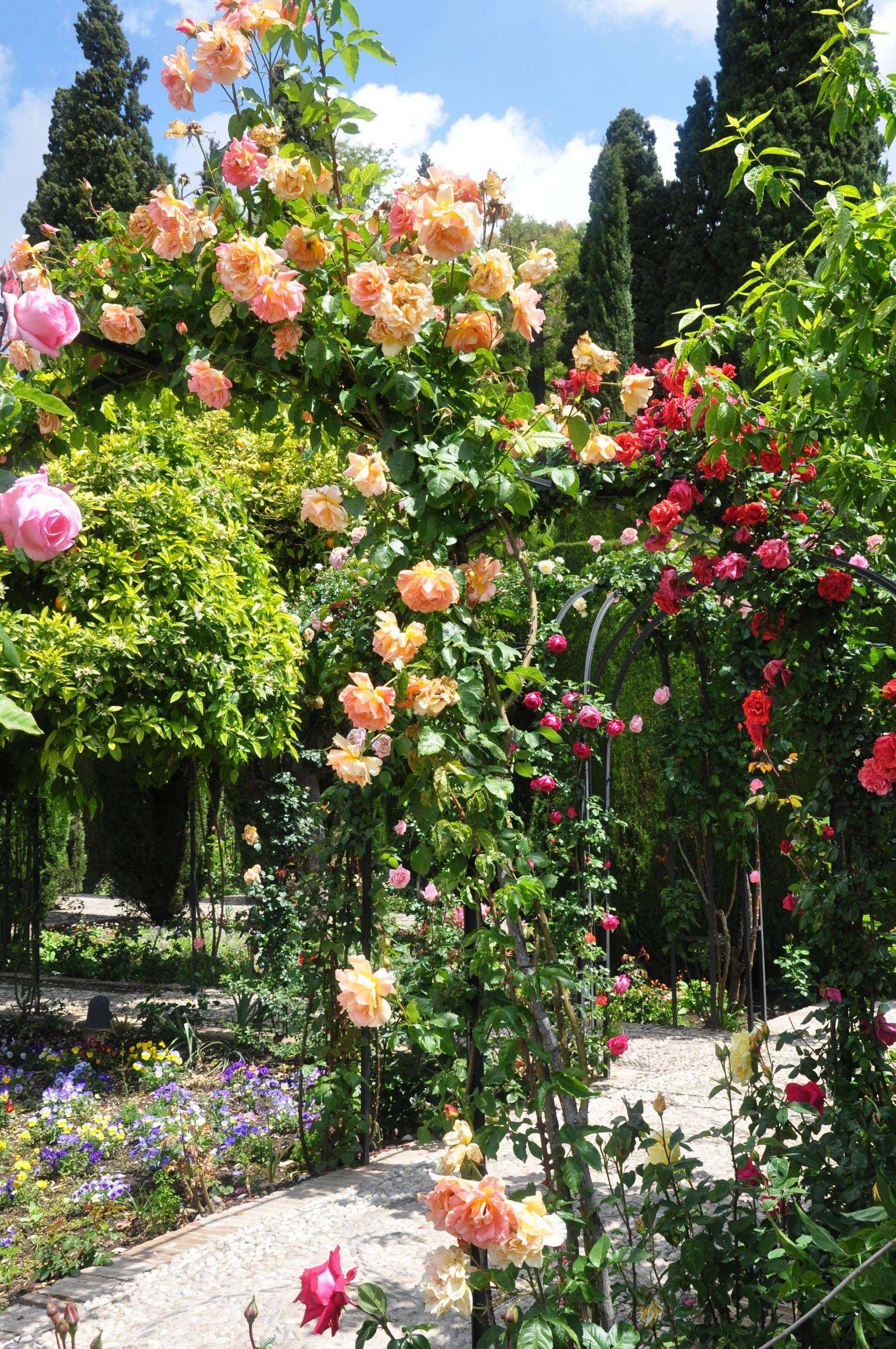 Rosiers des jardins du generalife de l alhambra vue sur for Decoration jardin rosier