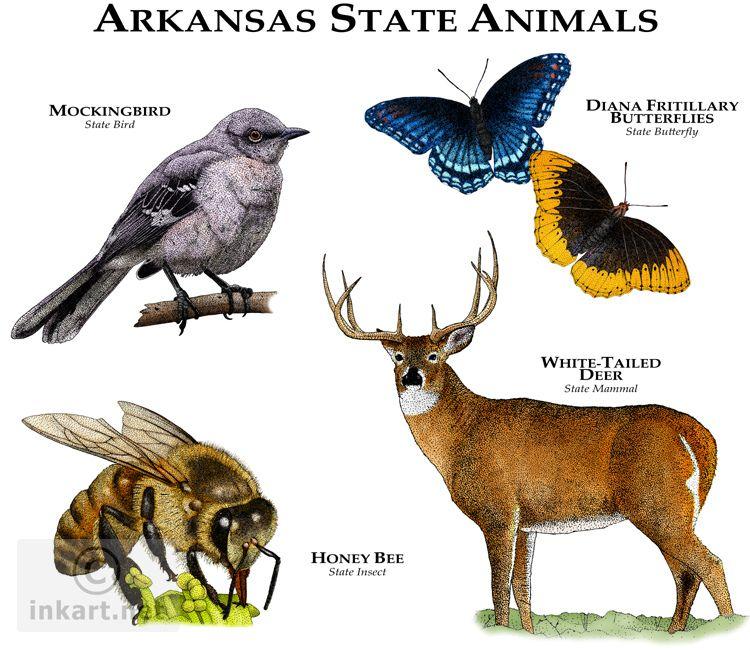 Arkansas State Animals Animals, Animal posters, Animal