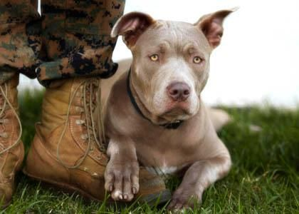 Two of the most loyal hero's in MY BOOK! LOVE ME a pitty and a soulder