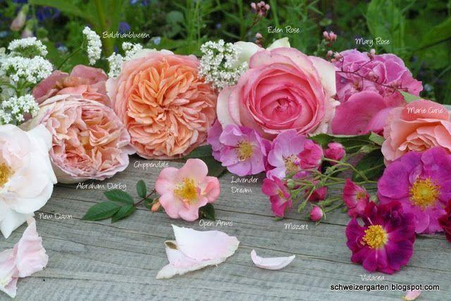 ein schweizer garten ein regenbogen voller bl ten rosen pinterest ein schweizer garten. Black Bedroom Furniture Sets. Home Design Ideas