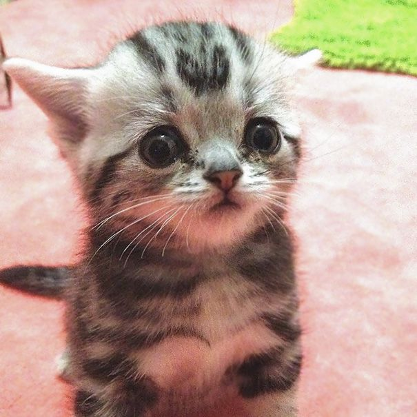 91 Of The Cutest Kittens Ever Kittens Cutest Cutest Kittens Ever Kittens