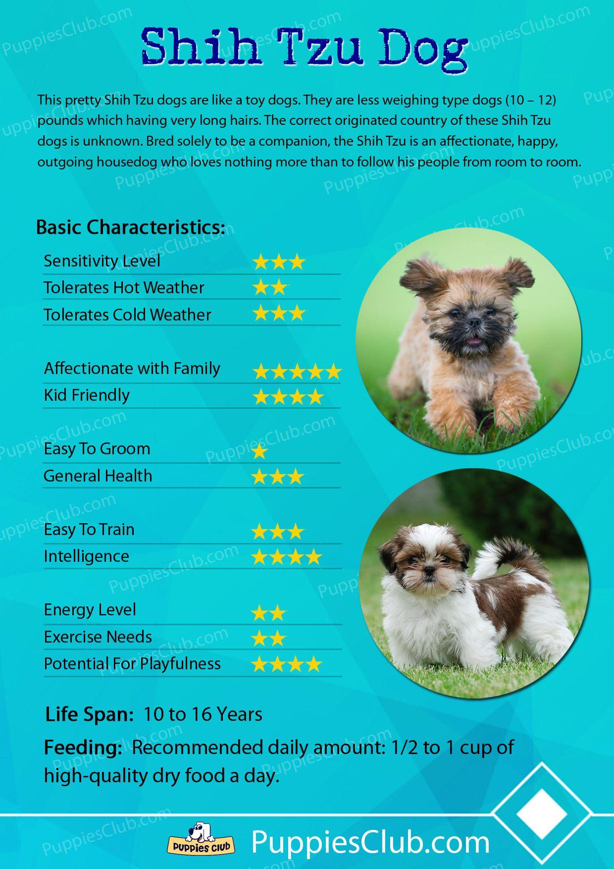 Shih Tzu Shih Tzu Dog Dog Facts Shih Tzu Puppy Training