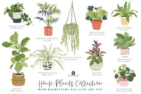 Photo of House Plants Collection by SmallHouseBigPony on Creative Market