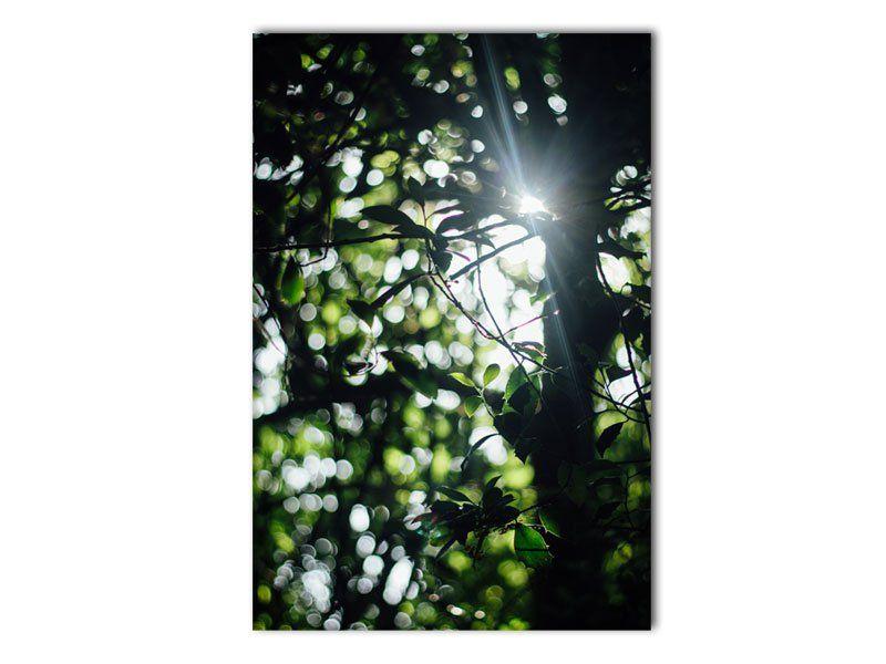 Wald Sonnenstrahlen Leinwand