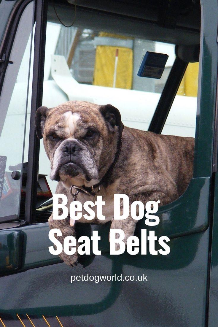 Best dog seat belts dog seat belt dog seat dogs