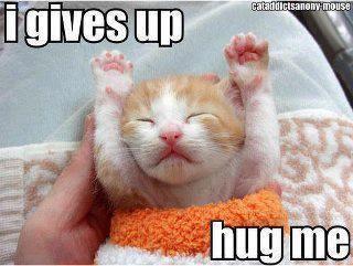 Those little paw-hands. Disturbing cuteness levels here, folks.