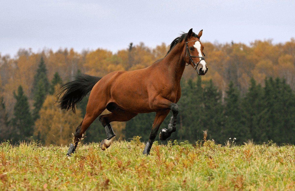 How Much Does a Horse Cost? Average Cost of Owning One in