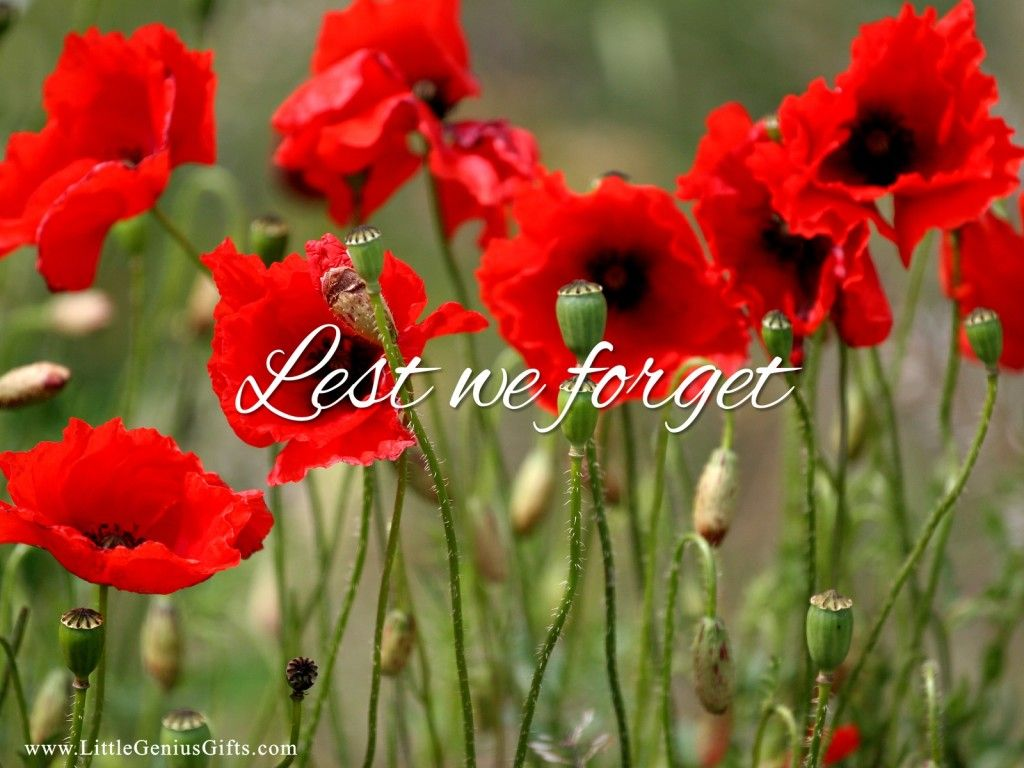 Remembrance Poppy Wallpapers For Download Personalized Gift Design