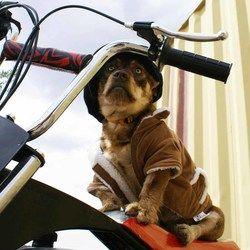 Petfinder Adoptable Dog | Terrier | Fort Davis, TX | Pikachu