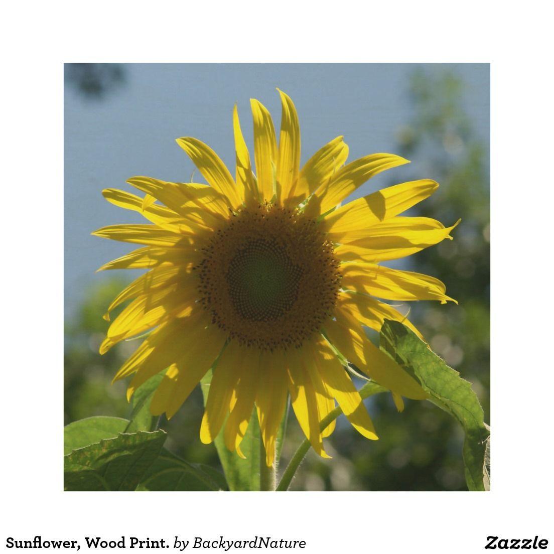 Sunflower, Wood Print. Wood Wall Decor | Nature internet shopping ...