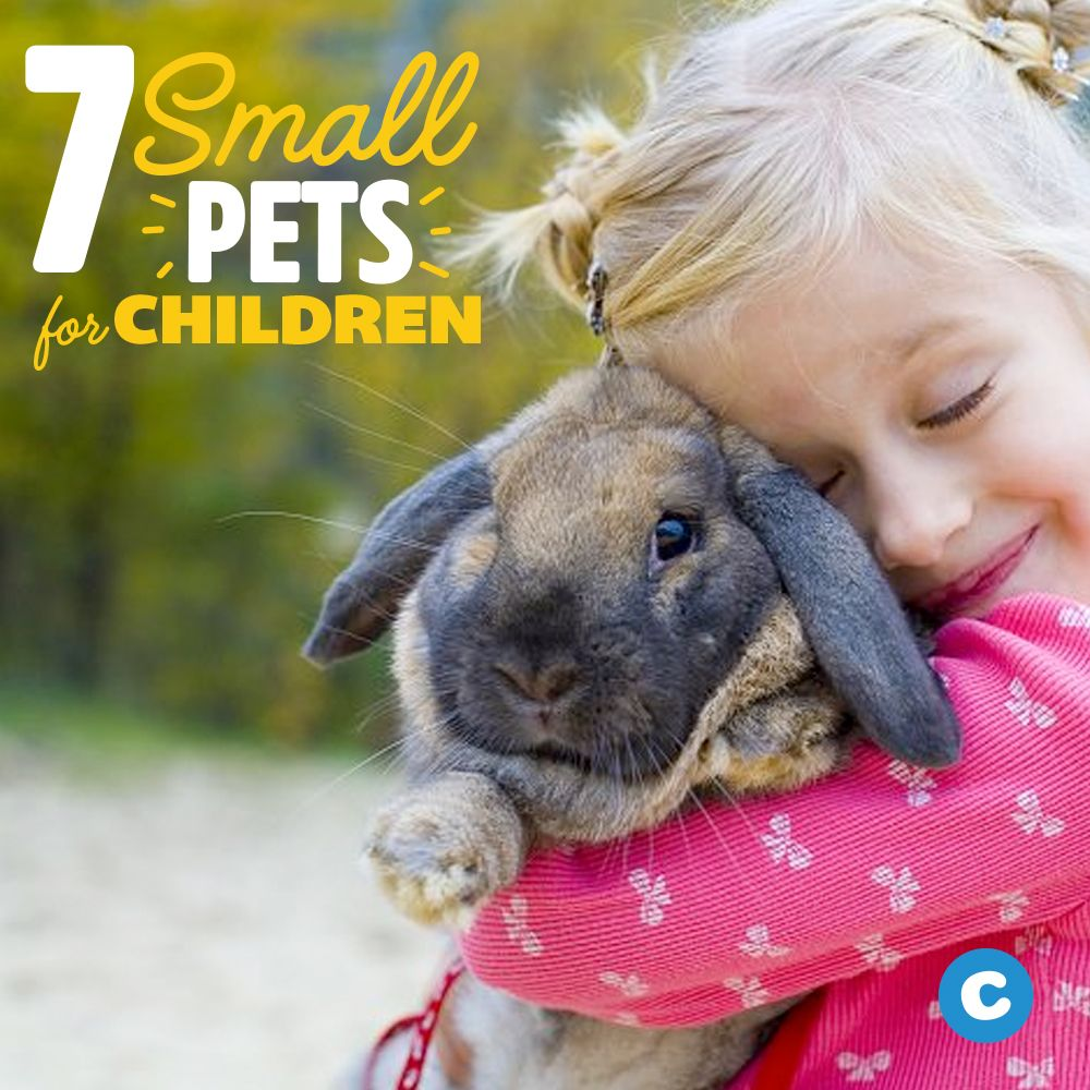 7 Best Small Animal Pets For Children Small Pets Animals Pets
