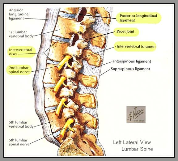 Pin By Mary Ann Lonski On Cervical Pinterest Back Pain Anatomy