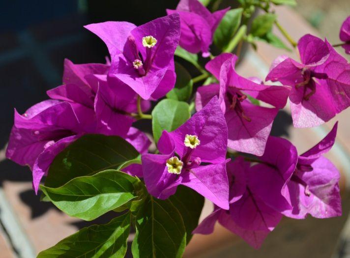 Daftar Nama Bunga Gambar Bunga Cantik Indah Unik Dan Langka Lengkap Dengan Penjelasannya Kumpulan Macam Macam Bunga Bunga Bunga Indah Bunga Bunga Kertas