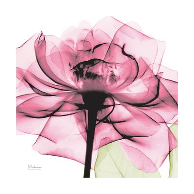 Pink roses , Posters and Prints at Art.com