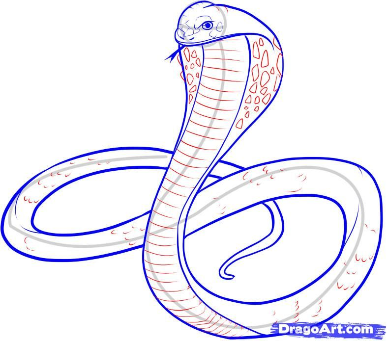 cobra drawings - Buscar con Google | Illustraciones ...