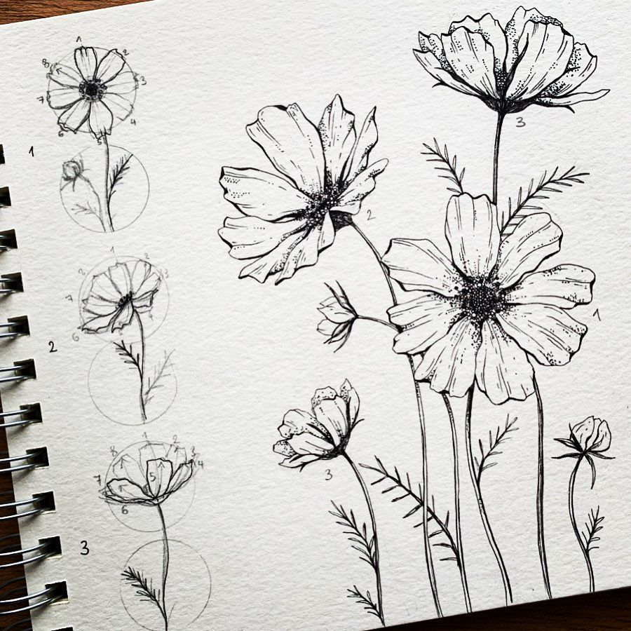 Alice On Instagram Cosmos Now You Know How To Draw