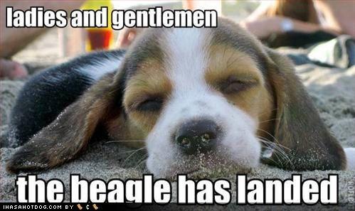 Ladies And Gentlemen The Beagle Has Landed Beagles Rule