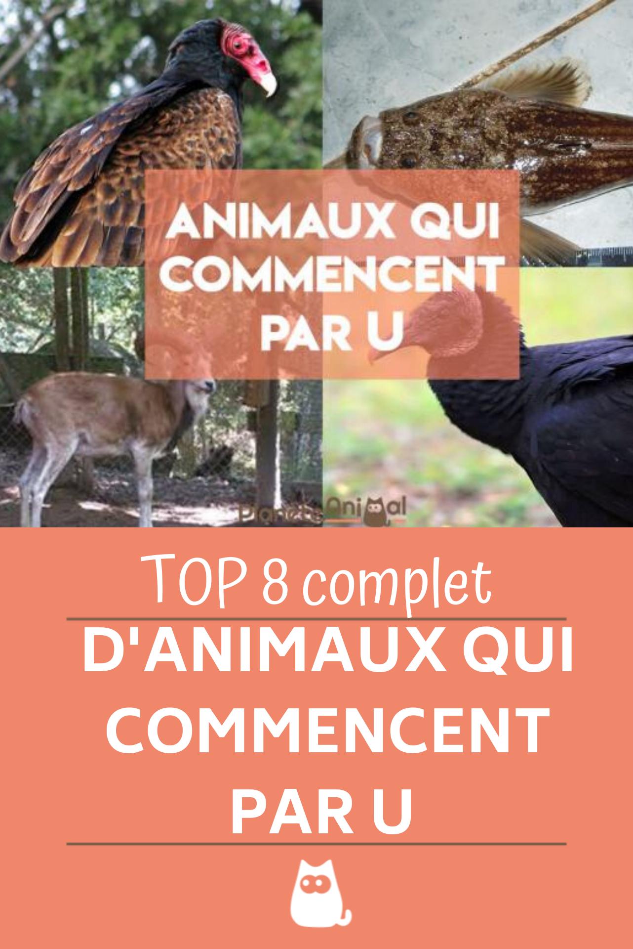Animal Qui Commence Par U : animal, commence, Animal, Commence, Français, Anglais, Animaux,, Animaux, Sauvages,, Hilarants