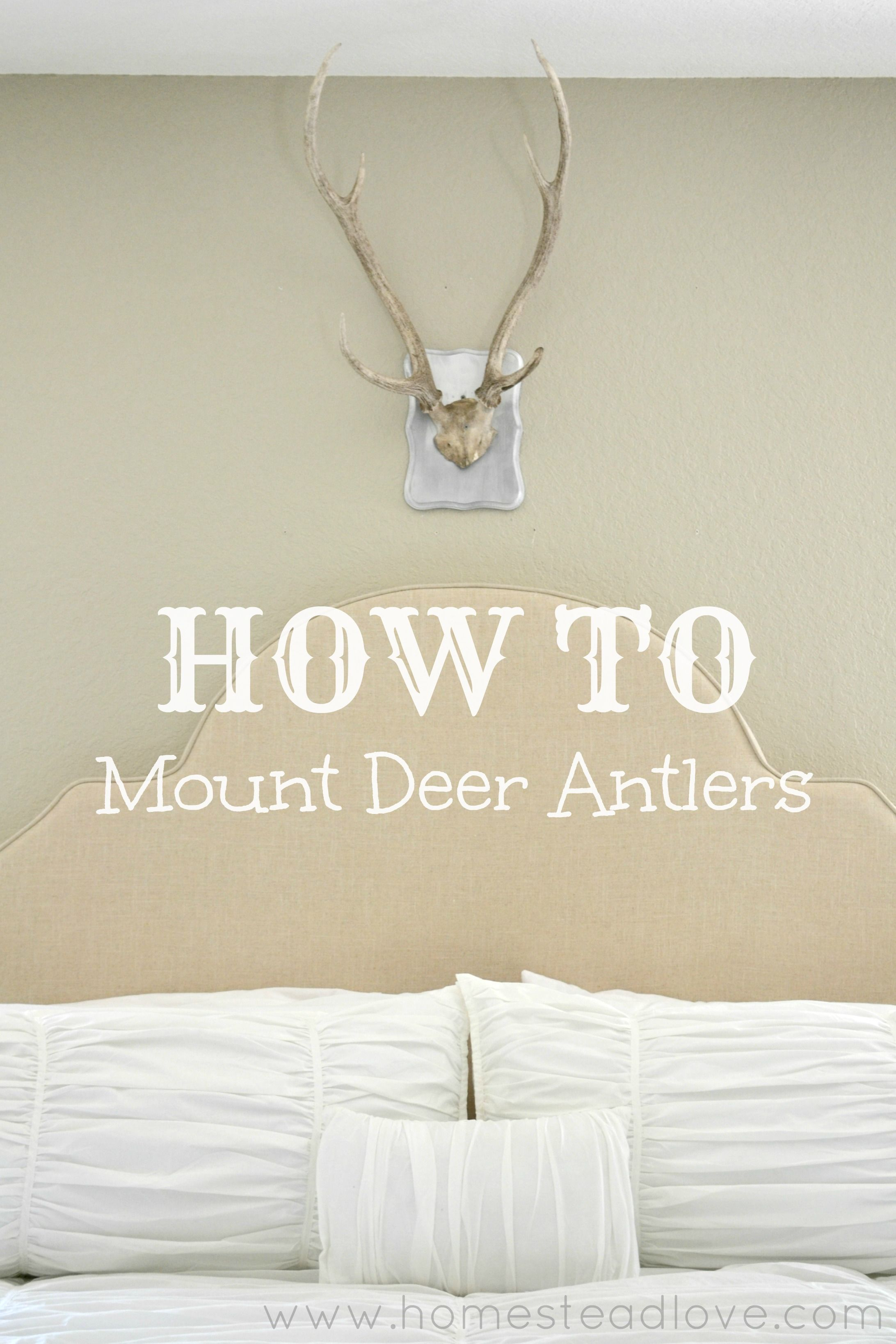 How To Mount Deer Antlers