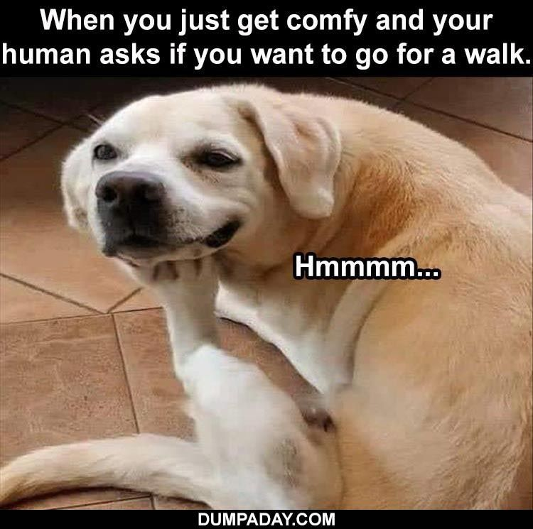 The Funniest Animal Memes Of The Week 35 Pics Part 2 In 2021 Funny Animal Memes Funny Animals Animal Memes