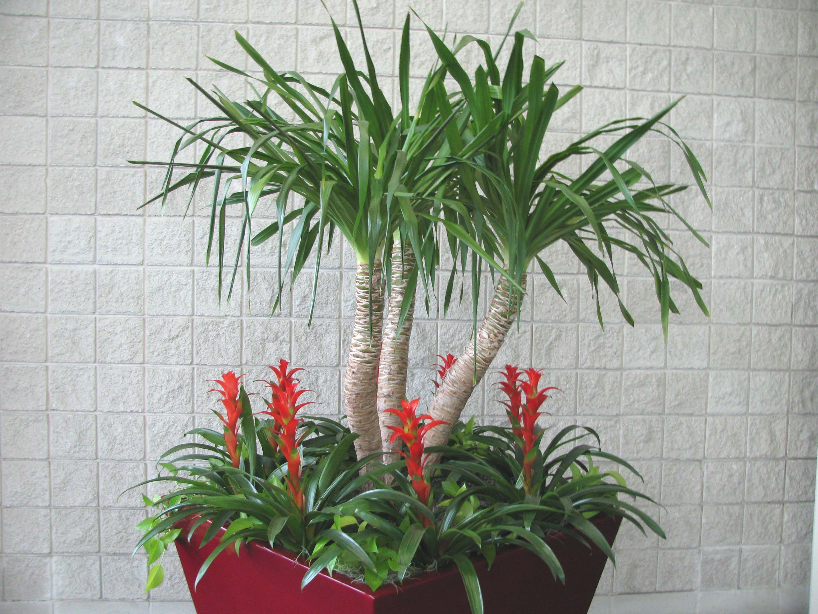 Best Kitchen Gallery: Indoor House Plants How To For Your Indoor Plants Links of Tropical House Plants For Sale  on rachelxblog.com
