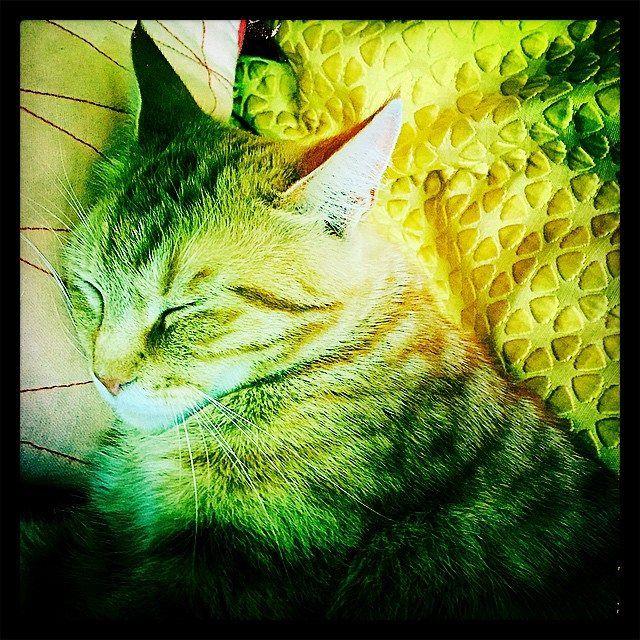 06/14 - Knofje slaapt op een geel kussen op de bank.