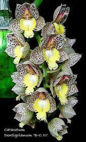 Wie pflege ich Orchideen? Klicken Sie auf und sehen Sie sich das Video an. --------------------------...   - Hoa lan - #auf #das #hoa #ich #Klicken #lan #Orchideen #pflege #sehen #sich #Sie #und #Video #Wie #orchideenpflege Wie pflege ich Orchideen? Klicken Sie auf und sehen Sie sich das Video an. --------------------------...   - Hoa lan - #auf #das #hoa #ich #Klicken #lan #Orchideen #pflege #sehen #sich #Sie #und #Video #Wie #orchideenpflege Wie pflege ich Orchideen? Klicken Sie auf und sehen #orchideenpflege