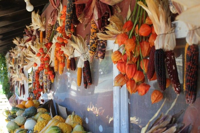Indian corn and Chinese lanterns