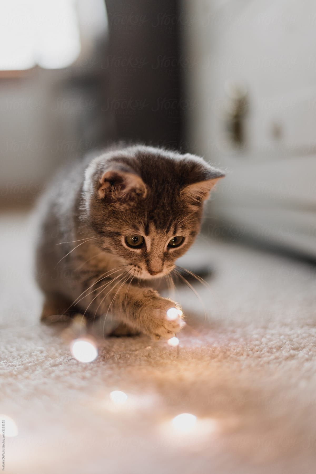 A Cute Little Kitten Playing With Christmas Lights Baby Cats