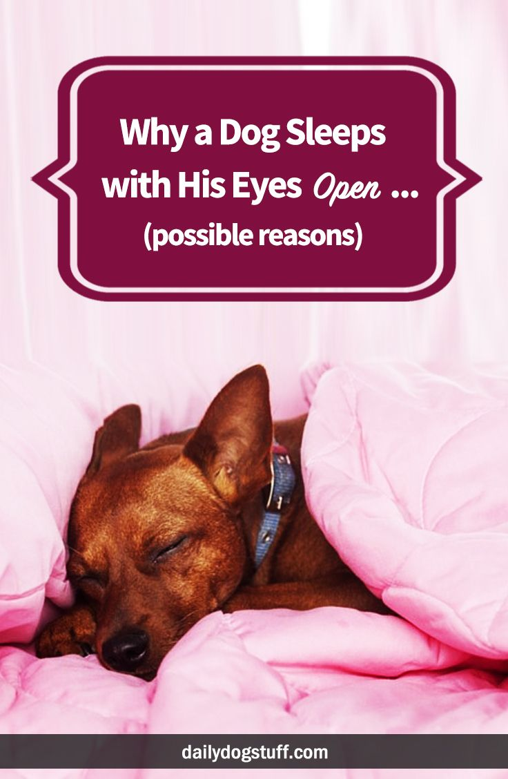 Why a Dog Sleeps with His Eyes Open .. (possible reasons