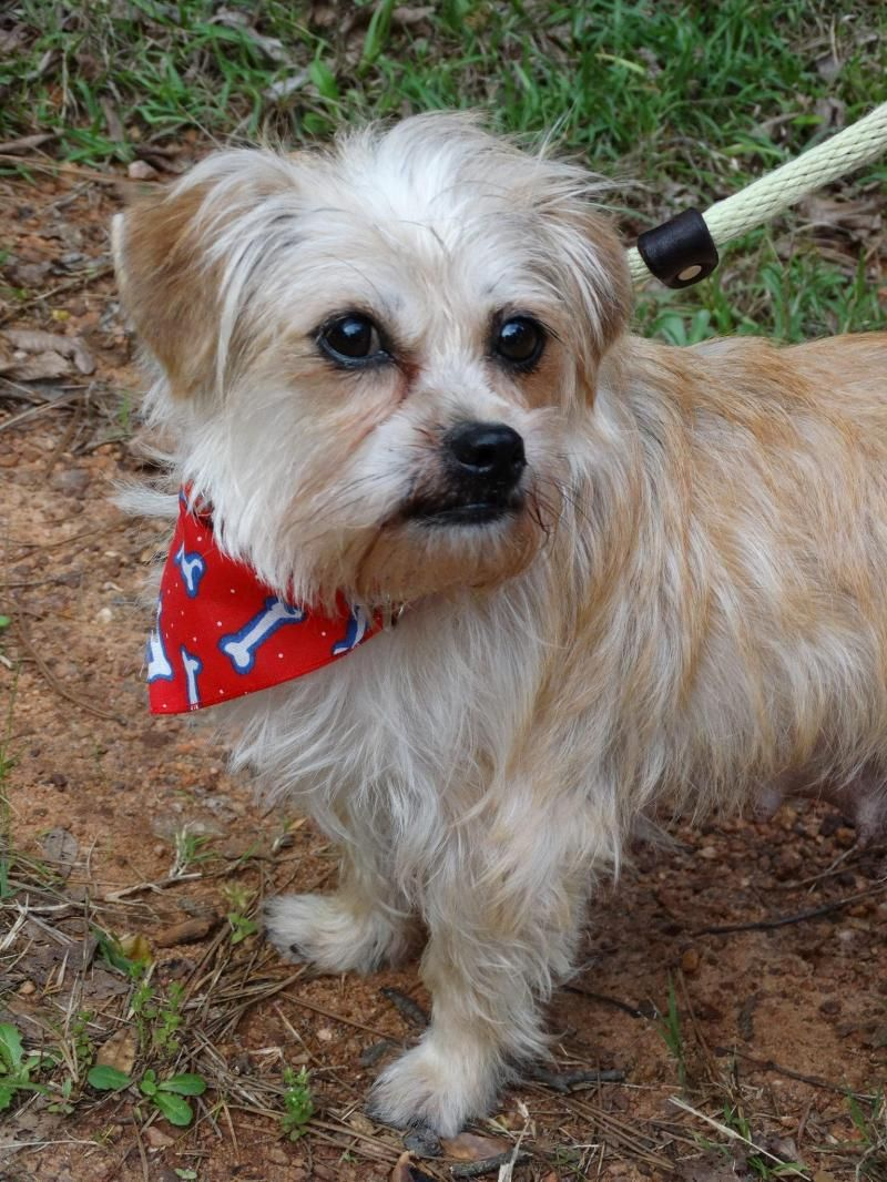 Adopt Trixie on Maltese dogs, Terrier mix dogs, Dogs