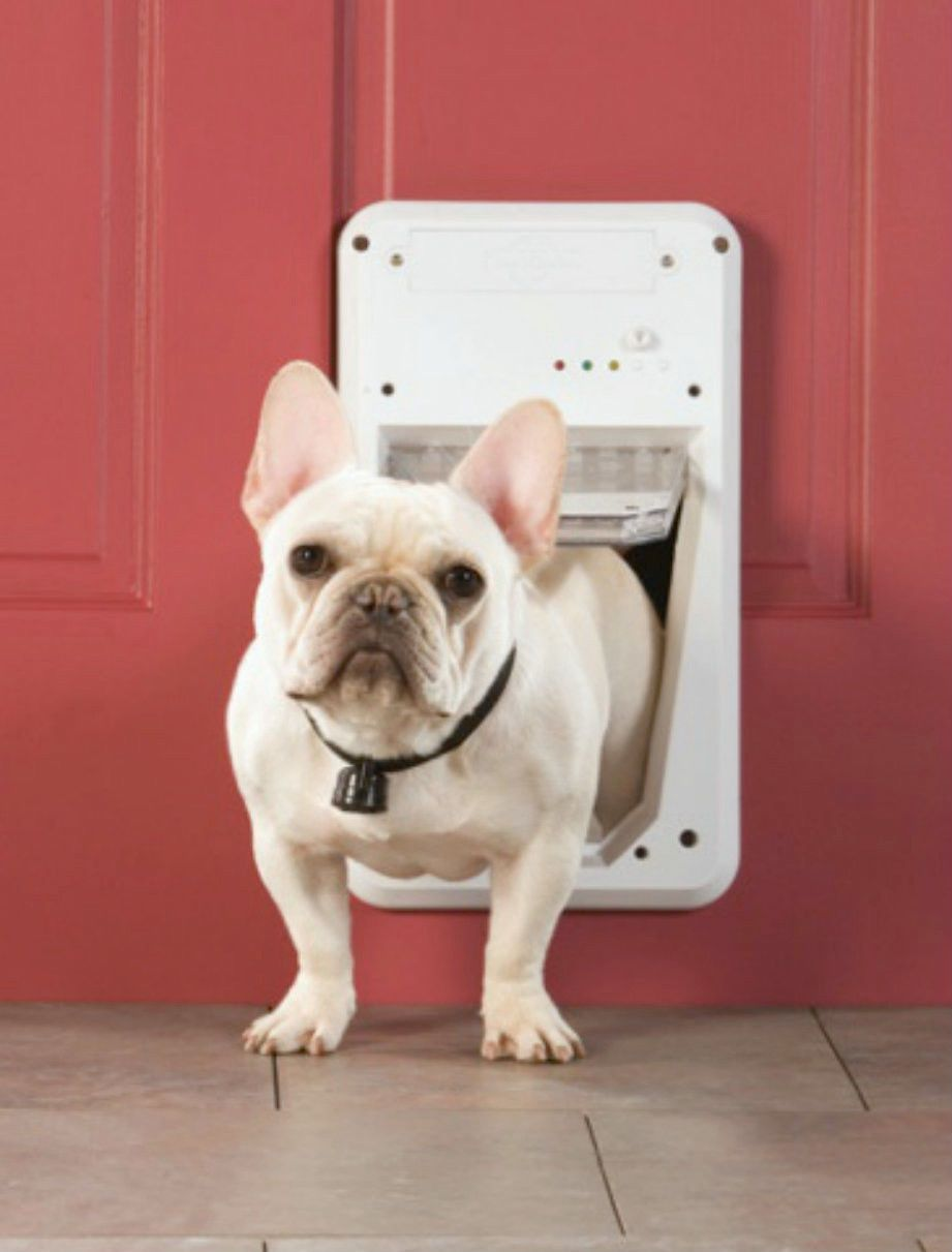 Dog Door Electronic Dogs Idea Home Pinterest Dog And Cat