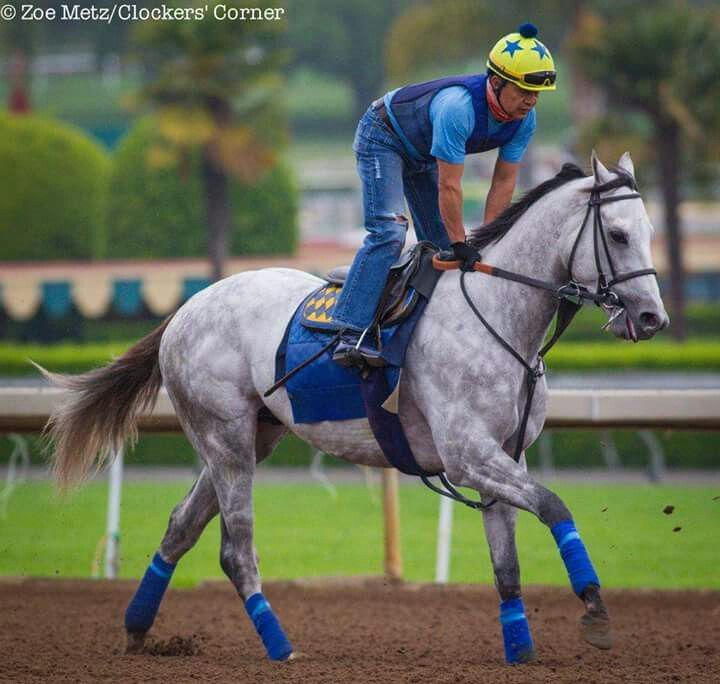 Cupid A Son Of Tapit Horse Racing Thoroughbred Horses