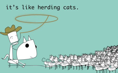 Herding Cats Google Search With Images Herding Cats