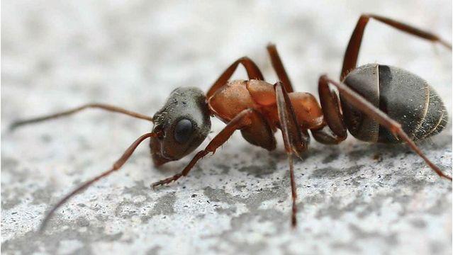 conseils et astuces entretien les petites astuces fourmis trucs et astuces et astuces. Black Bedroom Furniture Sets. Home Design Ideas