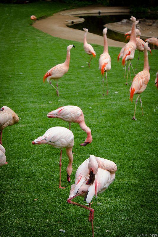 Somehow Reminds Me Of Miami Vice D Flamingo Pink Flamingos Lawn Flamingos