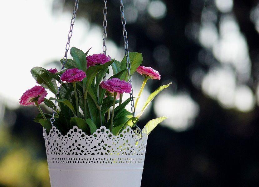 plantas colgantes de interior y de exterior httpswwwjardineriaon - Plantas Colgantes Exterior