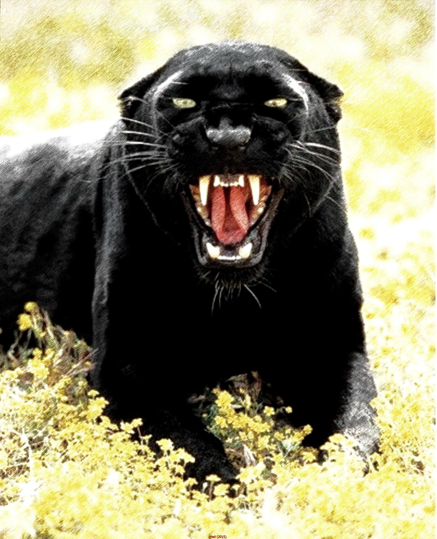Black Jaguar Growl: Pin De PLATAGONIA PUCON En Matito