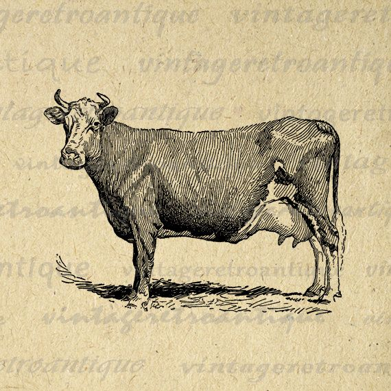 Digital Graphic Antique Cow Printable Farm Animal Download Illustrated Image Vintage Clip Art High Quality Illustration Fr